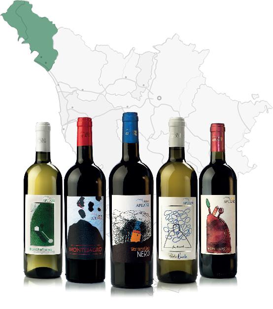 vini-terre-apuane